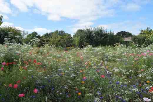 lismore castle wild flowers5