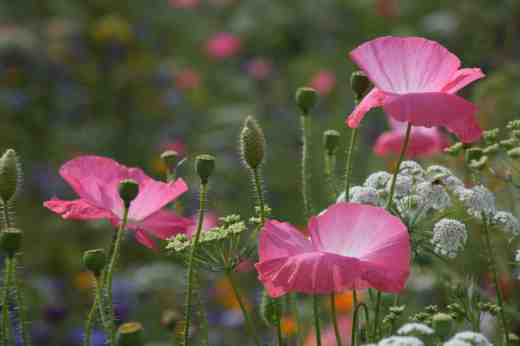 lismore castle wild flowers6