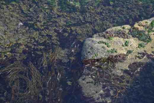 hook seaweed2