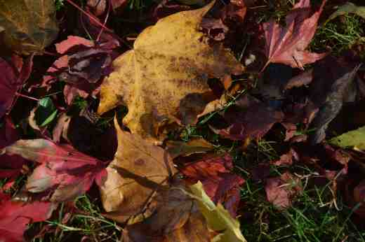 leaves oct 152