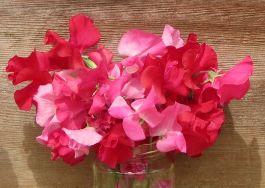 Sweet Pea for Royal Hospital Chelsea