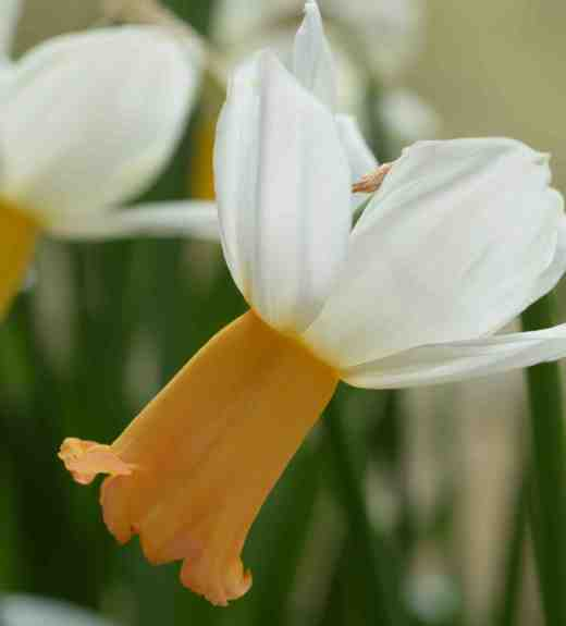 daff winter walt