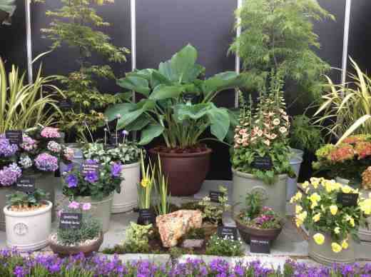 bloom stand 1610