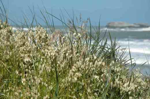 briza beach trinidad bay n calif 2 copy