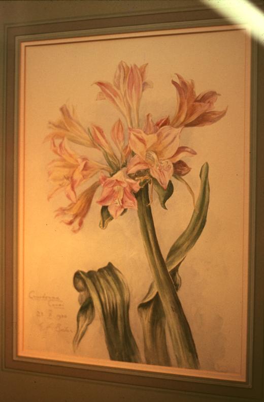 eab painting crinum