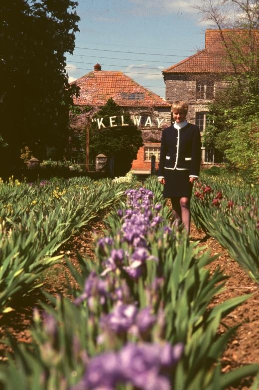 kelways nursery 91