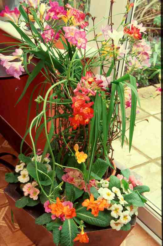 freesias-spring-cons-copy