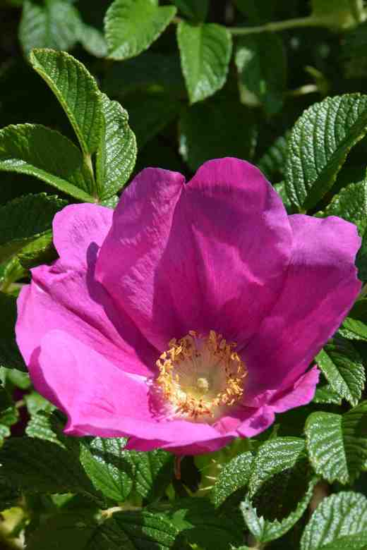 rosa-frau-dagmar-hastrupp-jfk-arb-june-15-2-copy