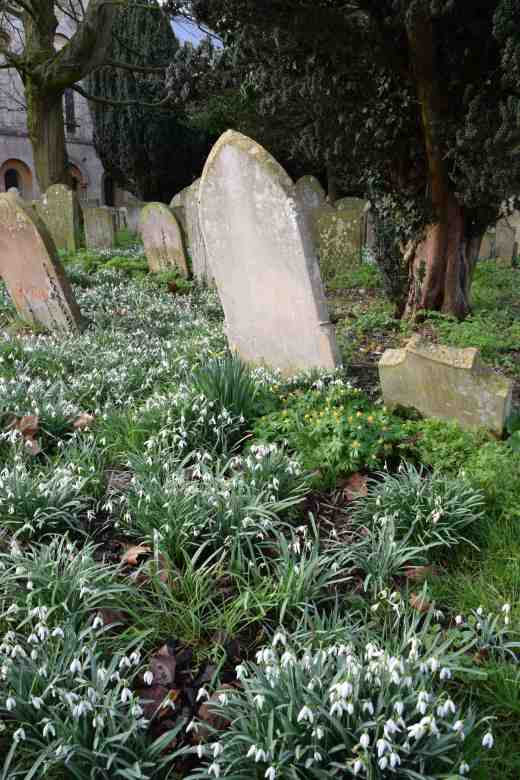 abbey-snowdrops-2
