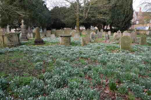 abbey-snowdrops-3