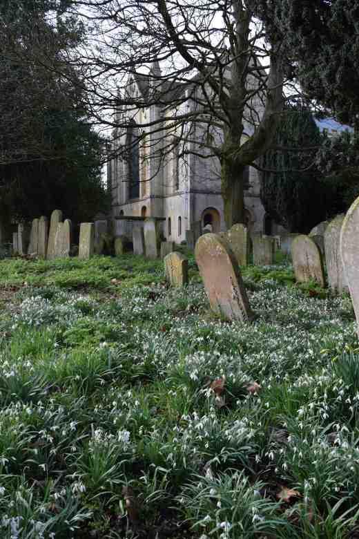abbey-snowdrops