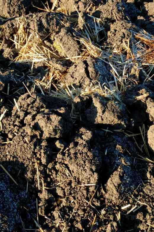 soil-frost-3-2-06-copy
