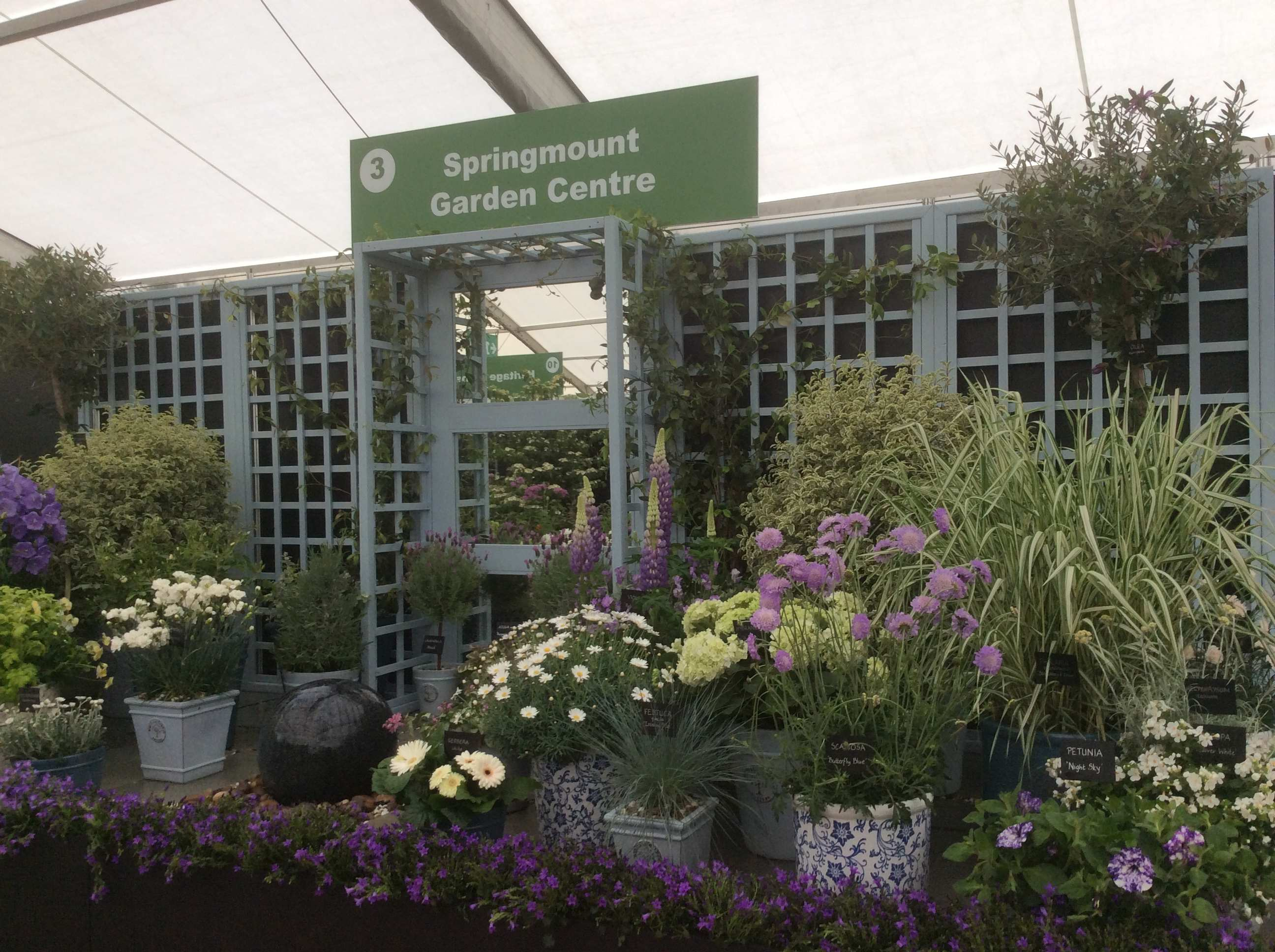 Blooms Garden Centre: Bloom In The Park 2017